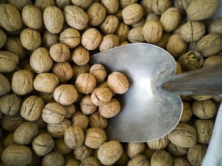 walnut-4156362_960_720.jpg