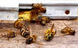 пчелы.jpg