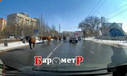 лошади.jpg