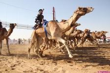 camel-festival-neil7.jpg