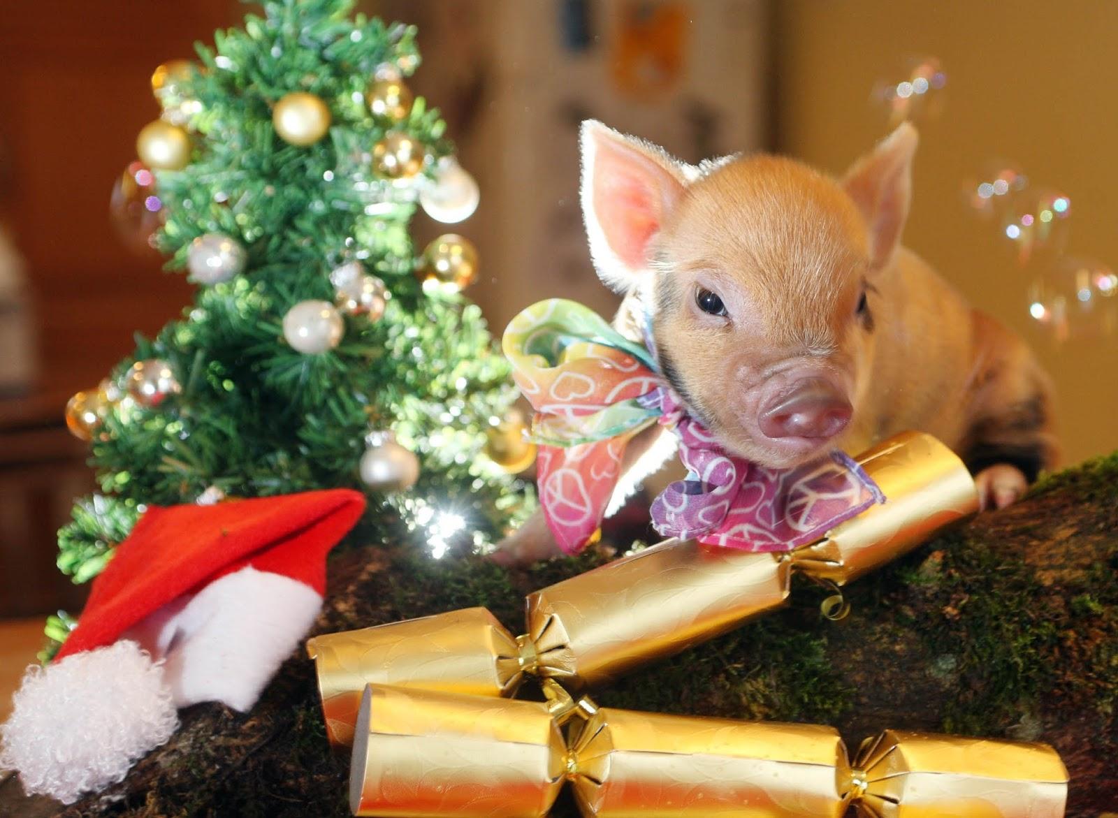 Картинки с новым годом коллегам год свиньи, днем