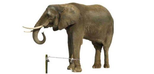слон колышку.jpg