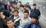 migranty.jpg