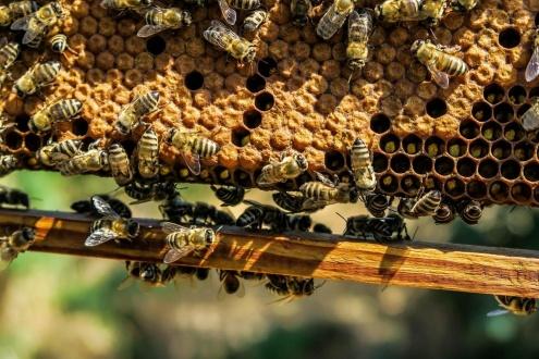 Пчеловодство.jpg